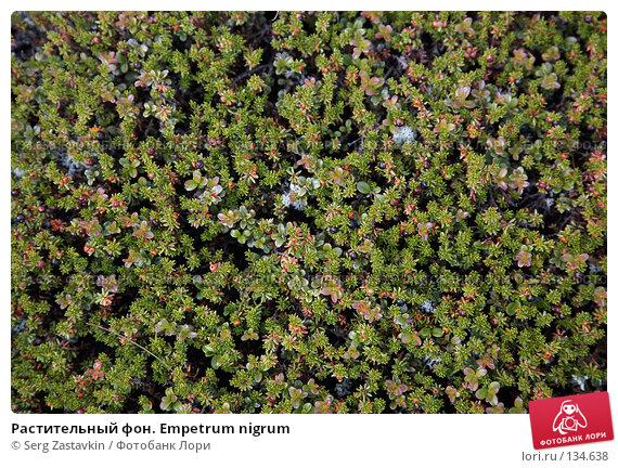 Купить «Растительный фон. Empetrum nigrum», фото № 134638, снято 12 августа 2006 г. (c) Serg Zastavkin / Фотобанк Лори