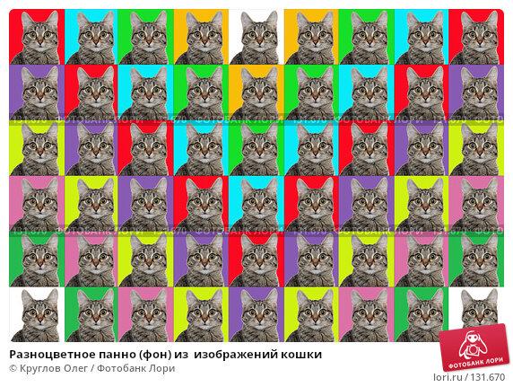Разноцветное панно (фон) из  изображений кошки, фото № 131670, снято 26 мая 2017 г. (c) Круглов Олег / Фотобанк Лори