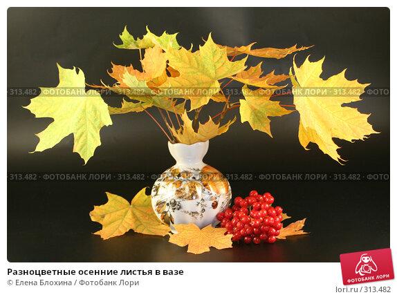 Разноцветные осенние листья в вазе, фото № 313482, снято 12 сентября 2007 г. (c) Елена Блохина / Фотобанк Лори