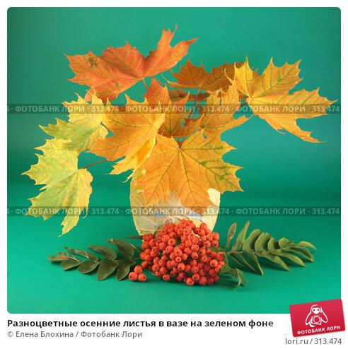 Разноцветные осенние листья в вазе на зеленом фоне, фото № 313474, снято 12 сентября 2007 г. (c) Елена Блохина / Фотобанк Лори