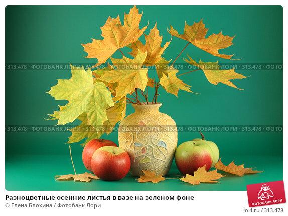 Разноцветные осенние листья в вазе на зеленом фоне, фото № 313478, снято 12 сентября 2007 г. (c) Елена Блохина / Фотобанк Лори