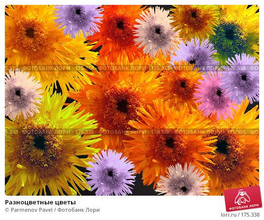 Разноцветные цветы, фото № 175338, снято 17 августа 2006 г. (c) Parmenov Pavel / Фотобанк Лори