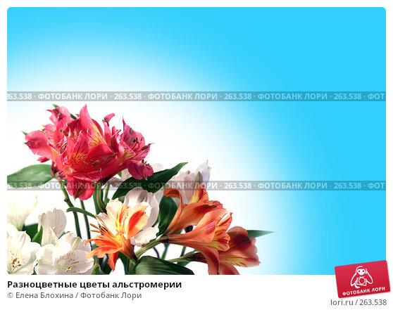 Купить «Разноцветные цветы альстромерии», фото № 263538, снято 22 апреля 2018 г. (c) Елена Блохина / Фотобанк Лори