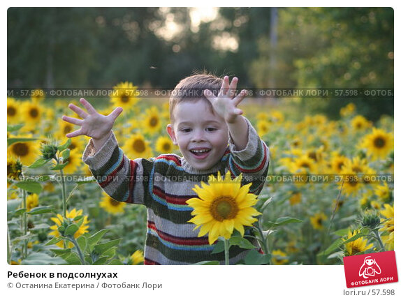 Ребенок в подсолнухах, фото № 57598, снято 3 августа 2006 г. (c) Останина Екатерина / Фотобанк Лори