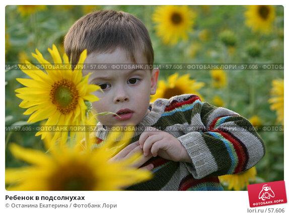 Ребенок в подсолнухах, фото № 57606, снято 3 августа 2006 г. (c) Останина Екатерина / Фотобанк Лори