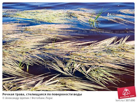 Речная трава, стелющаяся по поверхности воды, эксклюзивное фото № 307690, снято 17 мая 2008 г. (c) Александр Щепин / Фотобанк Лори