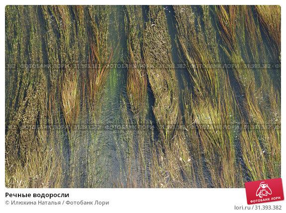 Купить «Речные водоросли», фото № 31393382, снято 19 июня 2019 г. (c) Илюхина Наталья / Фотобанк Лори
