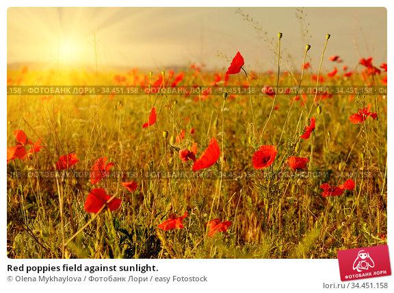 Red poppies field against sunlight. Стоковое фото, фотограф Olena Mykhaylova / easy Fotostock / Фотобанк Лори