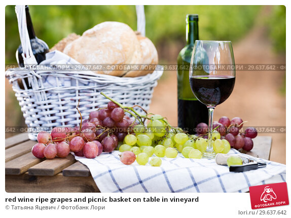 Купить «red wine ripe grapes and picnic basket on table in vineyard», фото № 29637642, снято 11 сентября 2017 г. (c) Татьяна Яцевич / Фотобанк Лори