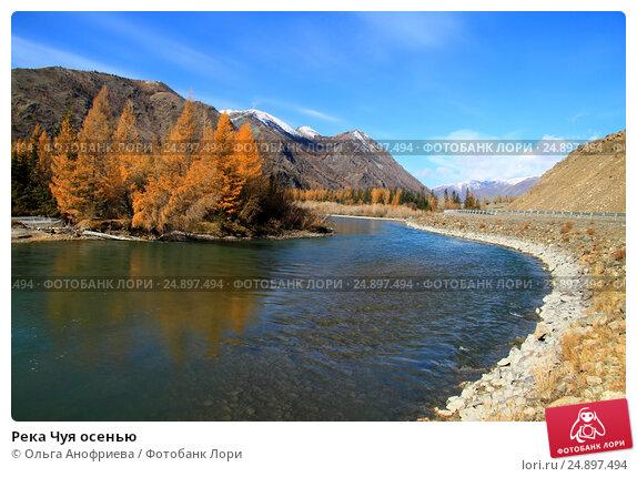 Купить «Река Чуя осенью», фото № 24897494, снято 6 октября 2016 г. (c) Olivas / Фотобанк Лори