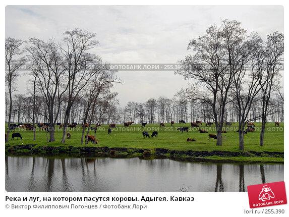 Река и луг, на котором пасутся коровы. Адыгея. Кавказ, фото № 255390, снято 6 апреля 2006 г. (c) Виктор Филиппович Погонцев / Фотобанк Лори