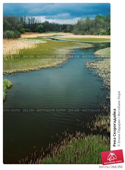 Река Скорогадайка, фото № 264350, снято 29 мая 2017 г. (c) Елена Падарян / Фотобанк Лори