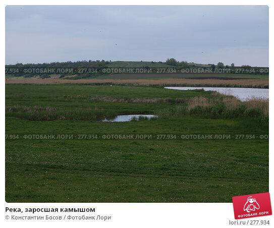 Река, заросшая камышом, фото № 277934, снято 25 июня 2017 г. (c) Константин Босов / Фотобанк Лори