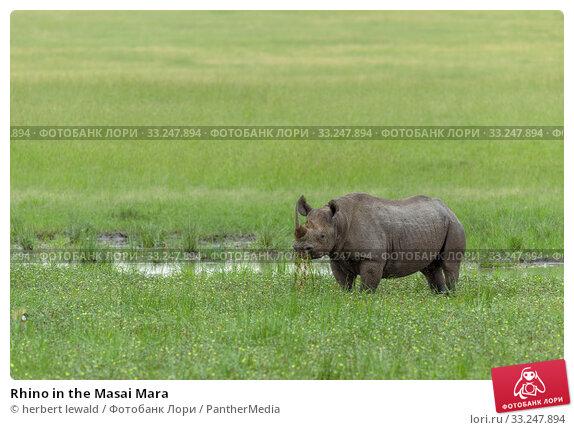 Купить «Rhino in the Masai Mara», фото № 33247894, снято 13 июля 2020 г. (c) PantherMedia / Фотобанк Лори