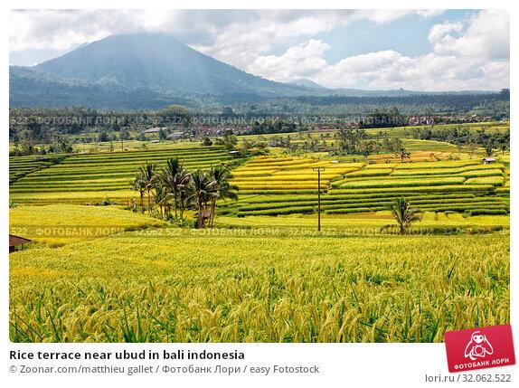 Rice terrace near ubud in bali indonesia. Стоковое фото, фотограф Zoonar.com/matthieu gallet / easy Fotostock / Фотобанк Лори