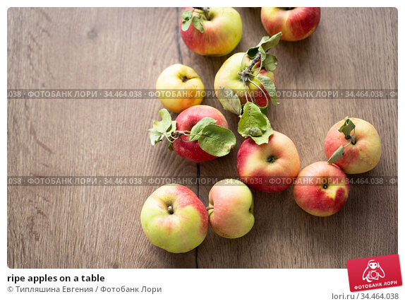 ripe apples on a table. Стоковое фото, фотограф Типляшина Евгения / Фотобанк Лори