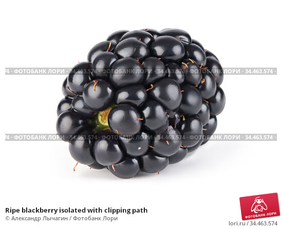 Ripe blackberry isolated with clipping path. Стоковое фото, фотограф Александр Лычагин / Фотобанк Лори