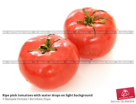 Ripe pink tomatoes with water drops on light background. Стоковое фото, фотограф Валерия Попова / Фотобанк Лори