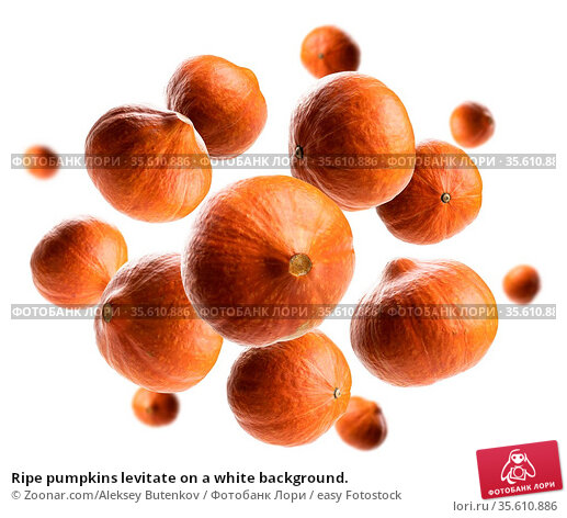Ripe pumpkins levitate on a white background. Стоковое фото, фотограф Zoonar.com/Aleksey Butenkov / easy Fotostock / Фотобанк Лори