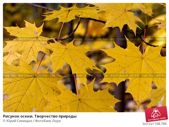 Рисунок осени. Творчество природы, фото № 108794, снято 29 октября 2007 г. (c) Юрий Синицын / Фотобанк Лори