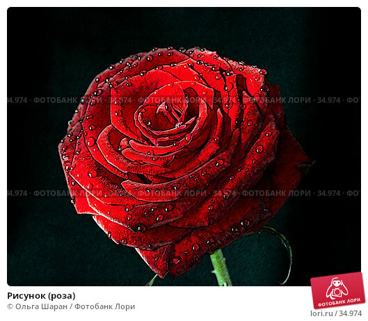 Рисунок (роза), фото № 34974, снято 23 февраля 2007 г. (c) Ольга Шаран / Фотобанк Лори