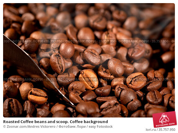 Roasted Coffee beans and scoop. Coffee background. Стоковое фото, фотограф Zoonar.com/Andres Victorero / easy Fotostock / Фотобанк Лори