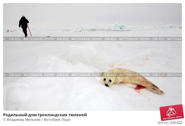 Родильный дом гренландских тюленей, фото № 230622, снято 11 марта 2008 г. (c) Владимир Мельник / Фотобанк Лори