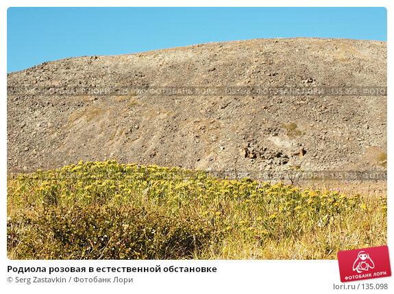 Родиола розовая в естественной обстановке, фото № 135098, снято 14 августа 2006 г. (c) Serg Zastavkin / Фотобанк Лори