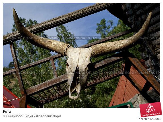 Рога, фото № 126086, снято 20 августа 2007 г. (c) Смирнова Лидия / Фотобанк Лори