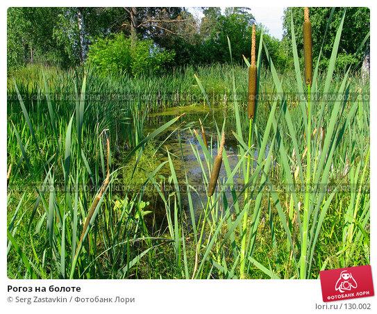 Рогоз на болоте, фото № 130002, снято 14 июля 2005 г. (c) Serg Zastavkin / Фотобанк Лори