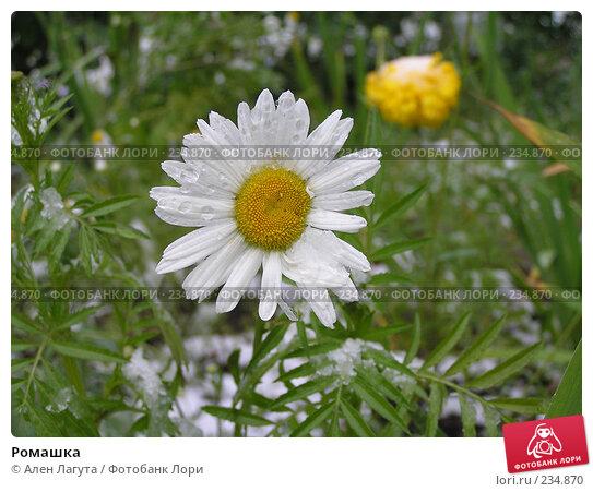 Купить «Ромашка», фото № 234870, снято 10 августа 2004 г. (c) Ален Лагута / Фотобанк Лори