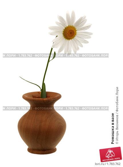 Купить «Ромашка в вазе», фото № 1783762, снято 20 июня 2010 г. (c) Игорь Веснинов / Фотобанк Лори