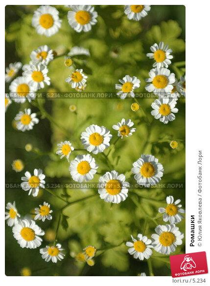 Ромашки, фото № 5234, снято 4 июля 2006 г. (c) Юлия Яковлева / Фотобанк Лори