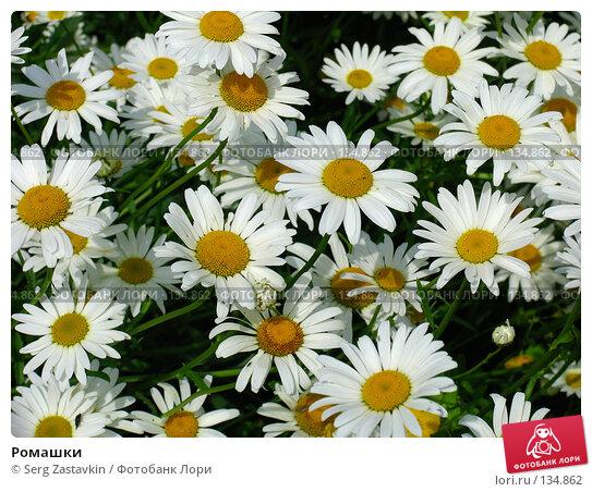 Ромашки, фото № 134862, снято 28 июня 2005 г. (c) Serg Zastavkin / Фотобанк Лори