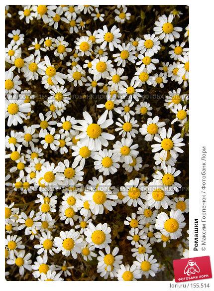 Купить «Ромашки», фото № 155514, снято 6 мая 2006 г. (c) Максим Горпенюк / Фотобанк Лори
