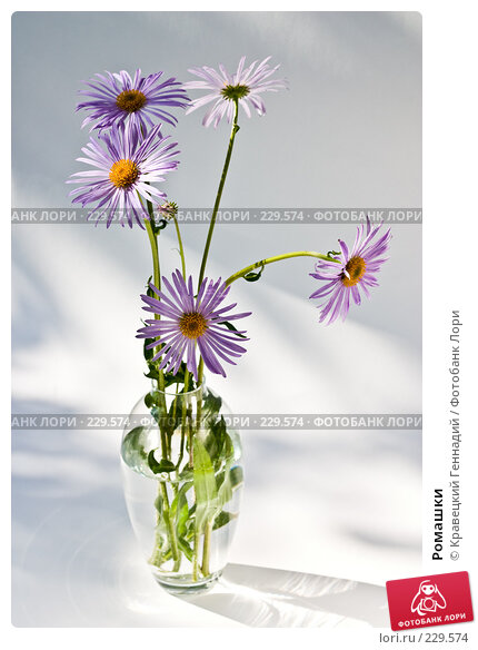 Ромашки, фото № 229574, снято 25 июня 2004 г. (c) Кравецкий Геннадий / Фотобанк Лори
