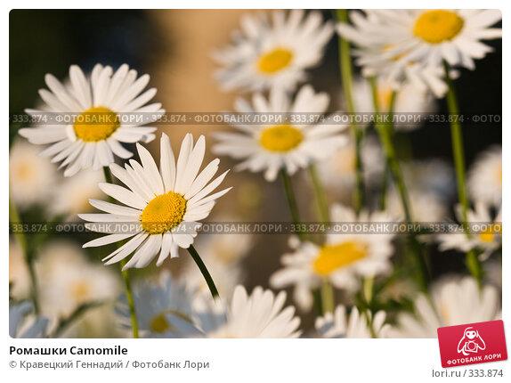 Ромашки Camomile, фото № 333874, снято 4 июня 2005 г. (c) Кравецкий Геннадий / Фотобанк Лори