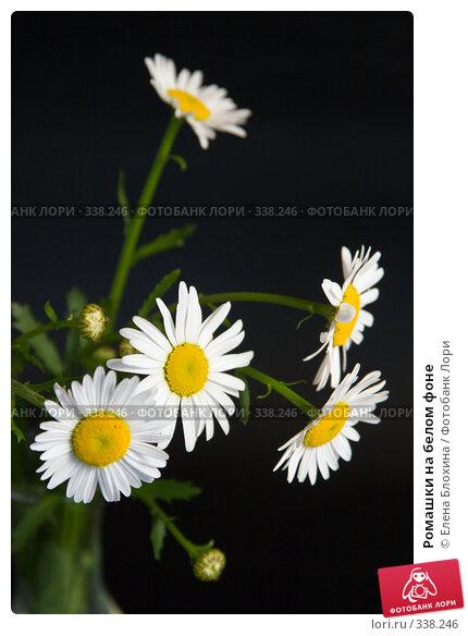 Ромашки на белом фоне, фото № 338246, снято 15 июня 2008 г. (c) Елена Блохина / Фотобанк Лори