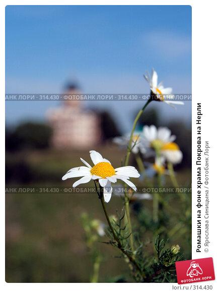 Ромашки на фоне храма Покрова на Нерли, фото № 314430, снято 29 июля 2007 г. (c) Ярослава Синицына / Фотобанк Лори