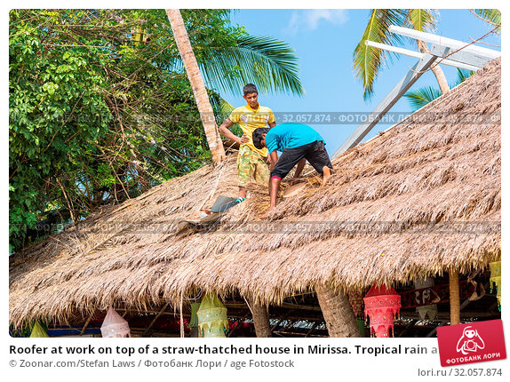 Roofer at work on top of a straw-thatched house in Mirissa. Tropical rain and high temperature strain the roofs in the monsoon season. Стоковое фото, фотограф Zoonar.com/Stefan Laws / age Fotostock / Фотобанк Лори