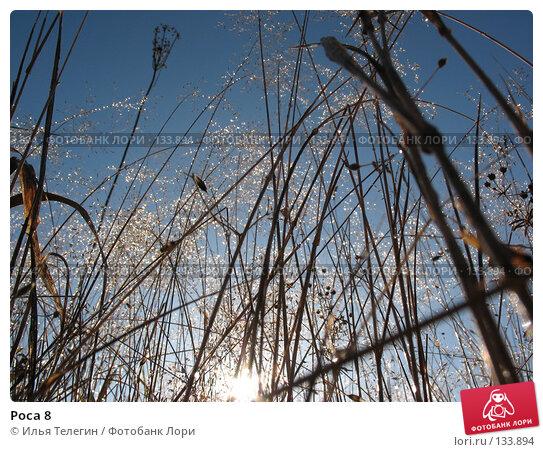 Роса 8, фото № 133894, снято 2 октября 2007 г. (c) Илья Телегин / Фотобанк Лори
