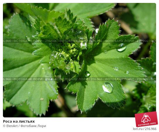 Роса на листьях, фото № 216966, снято 25 октября 2016 г. (c) ElenArt / Фотобанк Лори