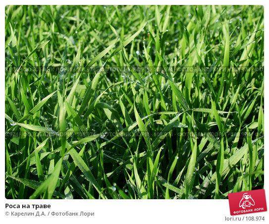 Роса на траве, фото № 108974, снято 19 октября 2007 г. (c) Карелин Д.А. / Фотобанк Лори