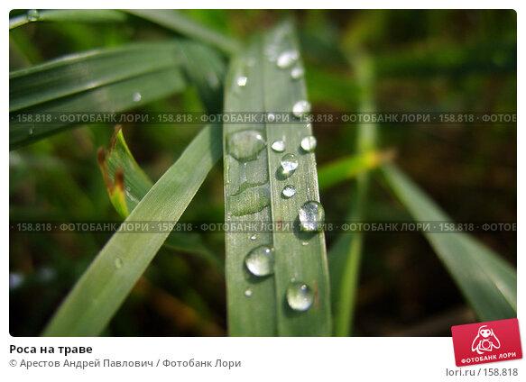 Роса на траве, фото № 158818, снято 16 августа 2007 г. (c) Арестов Андрей Павлович / Фотобанк Лори