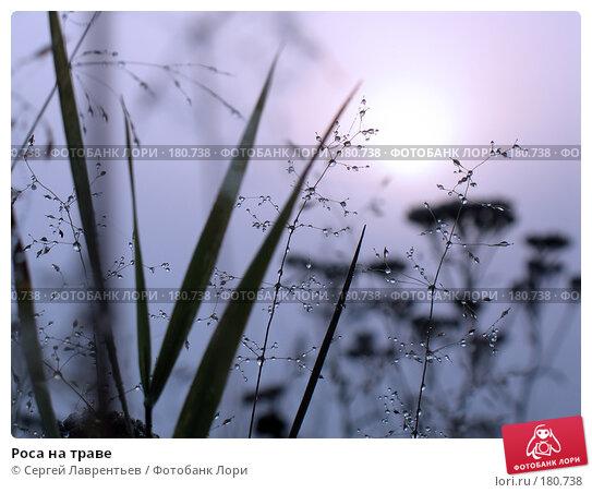 Роса на траве, фото № 180738, снято 29 августа 2006 г. (c) Сергей Лаврентьев / Фотобанк Лори
