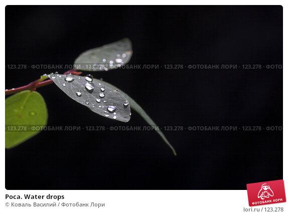 Роса. Water drops, фото № 123278, снято 26 апреля 2017 г. (c) Коваль Василий / Фотобанк Лори