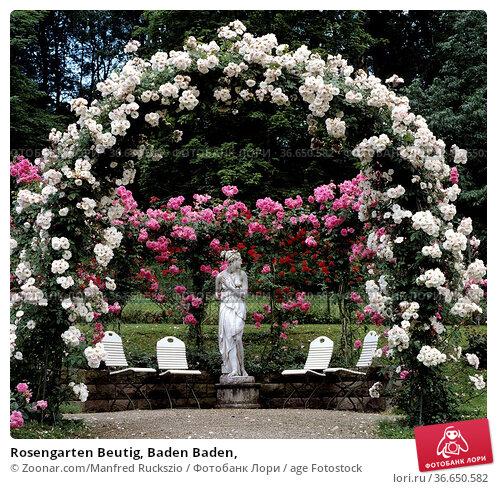 Rosengarten Beutig, Baden Baden, Стоковое фото, фотограф Zoonar.com/Manfred Ruckszio / age Fotostock / Фотобанк Лори