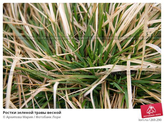 Ростки зеленой травы весной, фото № 269290, снято 2 мая 2008 г. (c) Архипова Мария / Фотобанк Лори