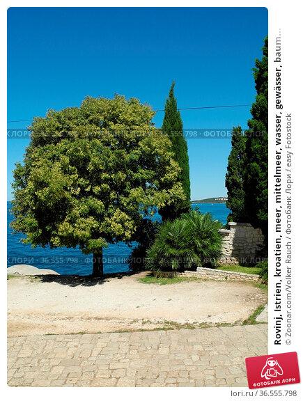 Rovinj, Istrien, kroatien, meer, mittelmeer, wasser, gewässer, baum... Стоковое фото, фотограф Zoonar.com/Volker Rauch / easy Fotostock / Фотобанк Лори