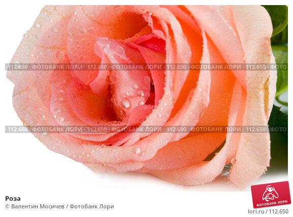 Роза, фото № 112650, снято 10 февраля 2007 г. (c) Валентин Мосичев / Фотобанк Лори